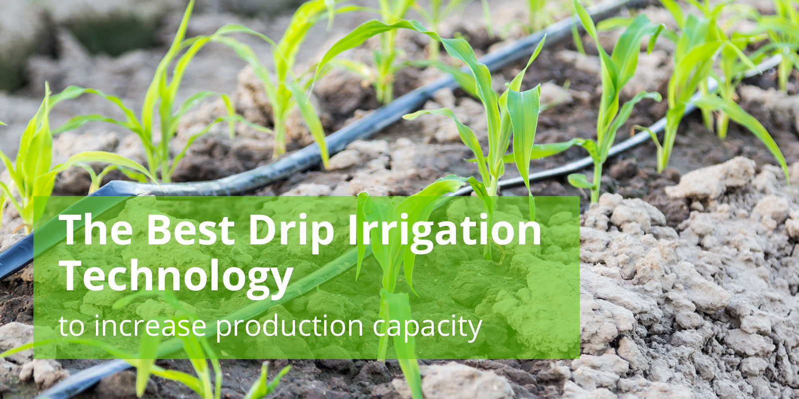 Pipe for drip irrigation: what to focus on when choosing a pipeline rules for working with him 53